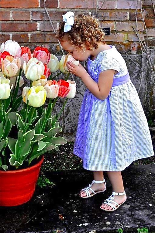 Isla Tulips