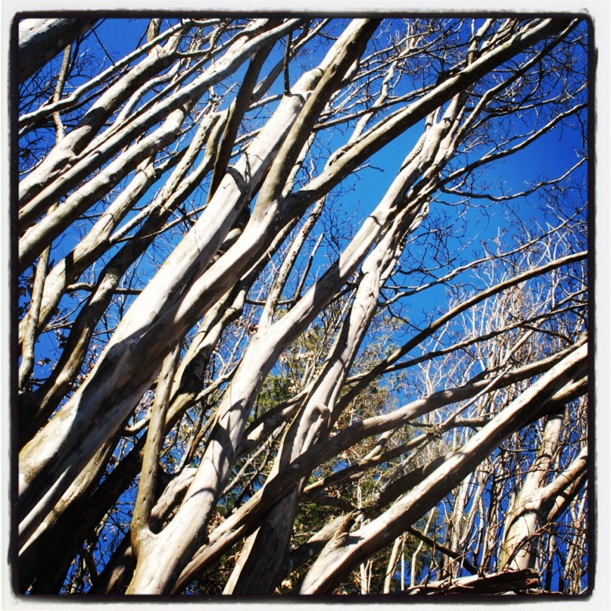 Late Spring Tree