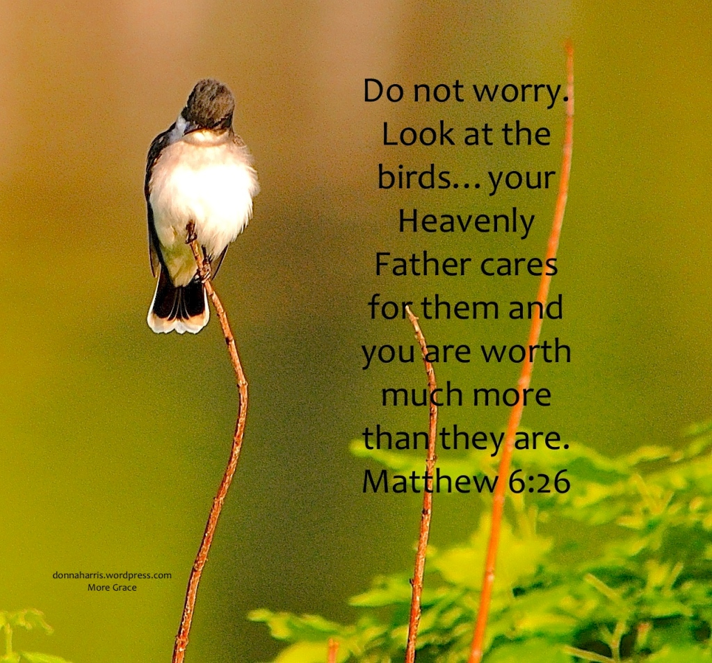 Bird Matthew 6:26 Lent