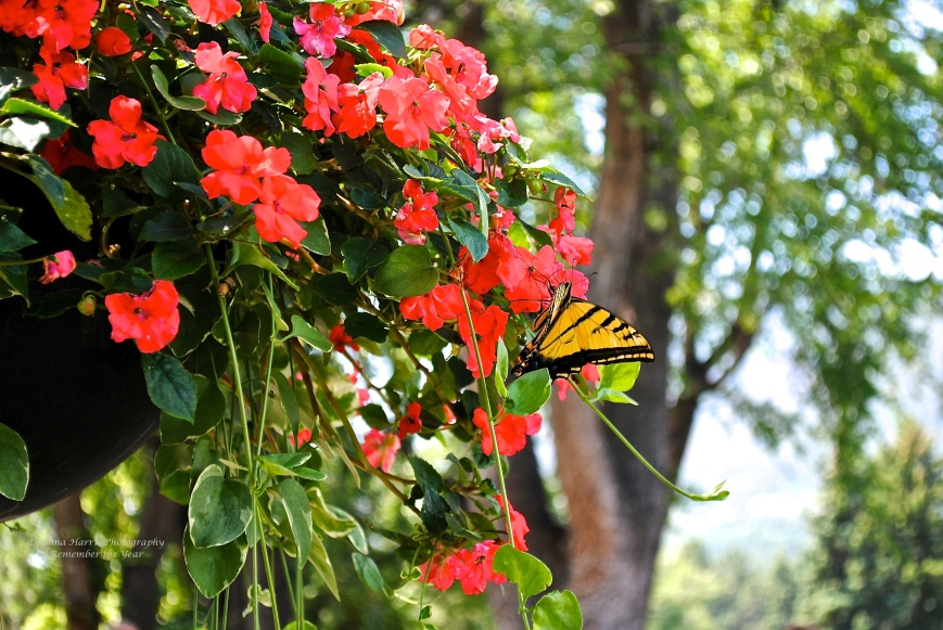 A Particular Butterfly